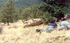 elk hunting training