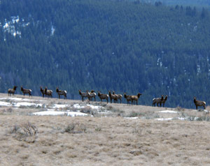 elk hunting guide school