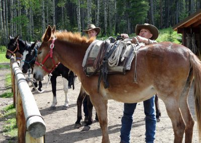learn to pack a mule