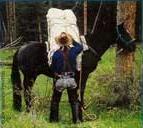 mule traning