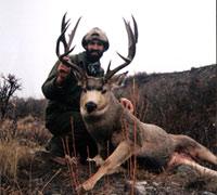 elk hunting job