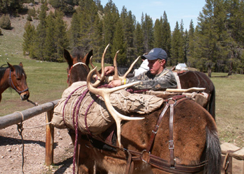 elk trianing school
